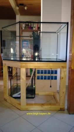 aquarium_steht4_meerwasseraquarium_diy_led-lampe_rueckwand_riffsaeule_erfahrungsbericht