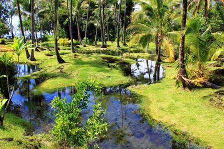 hilo_hawaii_kreuzfahrt_suedpazifik_radiance_of_the_seas_reisebericht8