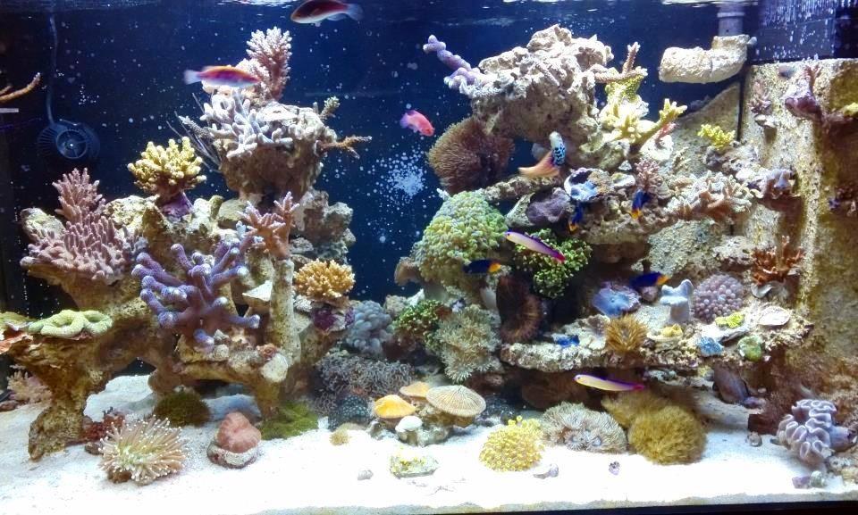 ohne_einfahrphase_meerwasseraquarium_diy_led-lampe_rueckwand_riffsaeule_erfahrungsbericht