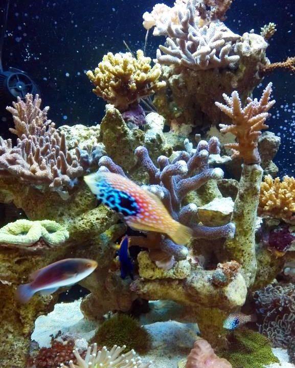 ohne_einfahrphase_meerwasseraquarium_diy_led-lampe_rueckwand_riffsaeule_erfahrungsbericht2