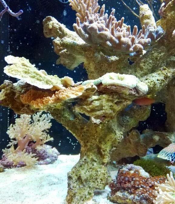 ohne_einfahrphase_meerwasseraquarium_diy_led-lampe_rueckwand_riffsaeule_erfahrungsbericht3