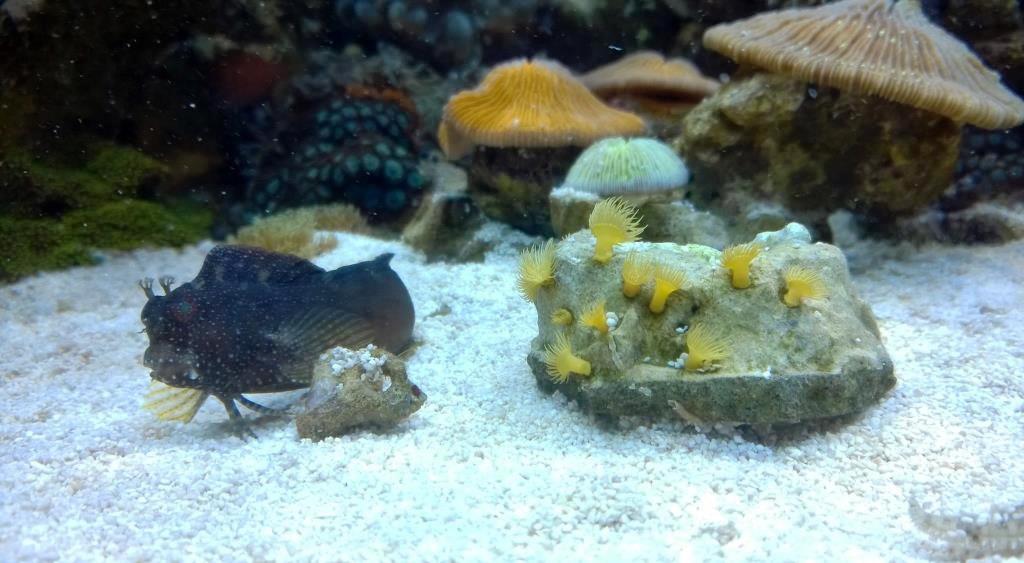 ohne_einfahrphase_meerwasseraquarium_diy_led-lampe_rueckwand_riffsaeule_erfahrungsbericht4